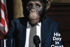 """Hurdle Cleared in Fight to Declare Chimps """"Legal Persons"""""""