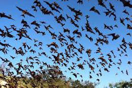 bats2 1050x700